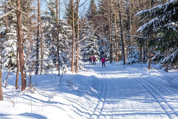 겨울 눈 속에서 숲 속 크로스 컨트리 스키