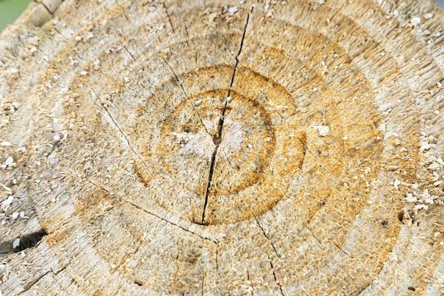 Поперечное сечение дерева. закройте вверх.