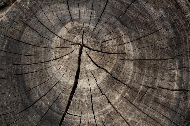 世紀のリングを持つ木の古い木の切り株の断面