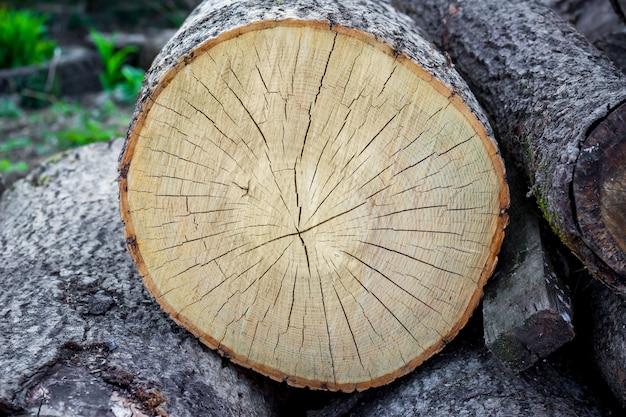 木の断面。亀裂のある木の構造