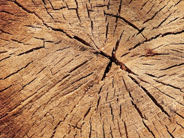 木の断面。クローズアップ木製カットテクスチャ。