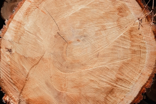 Cross section of tree trunk isolated