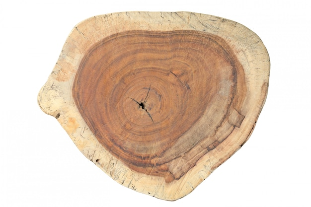 Cross section of tree trunk with growth rings