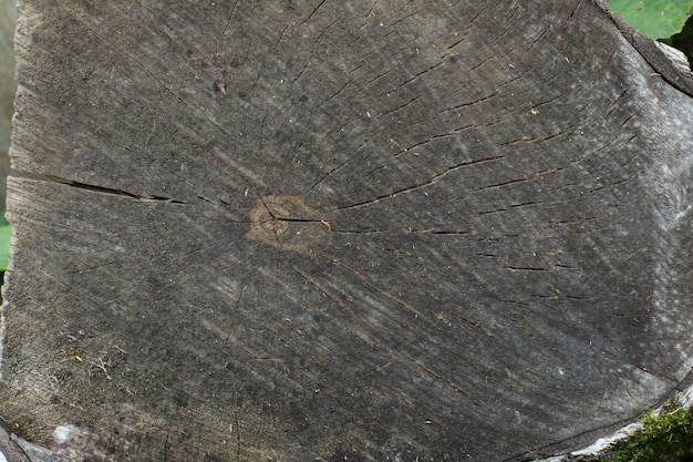 Cross-section of a tree