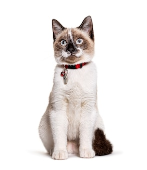 식별을 위해 캡슐 칼라 튜브와 종을 착용 한 잡종 고양이