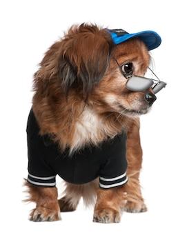 Скрещивать собаку в одежде и очках, стоя перед белой стеной