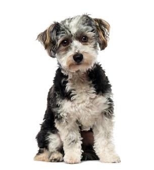 Гибрид собаки перед белой стеной