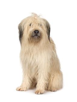 4歳の雑種犬。分離された犬の肖像画