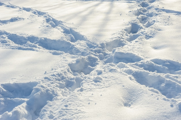 Crossed tracks on the snow
