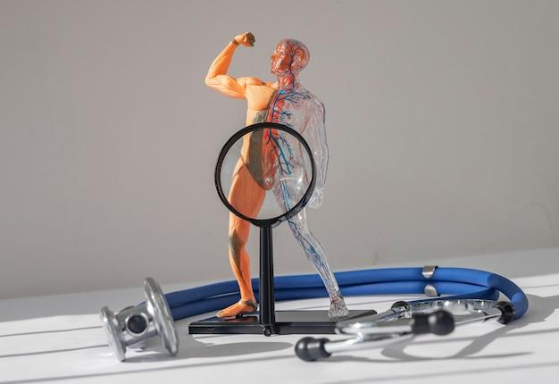 Концепция боли и болезней промежности диагностика дисфункции матки Premium Фотографии