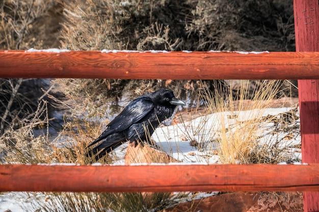 Canyonlands 국립 공원에서 까마귀