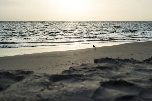Crow bird beach india sunset