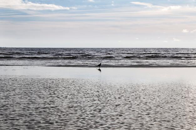 水の近くの自然の中のカラス
