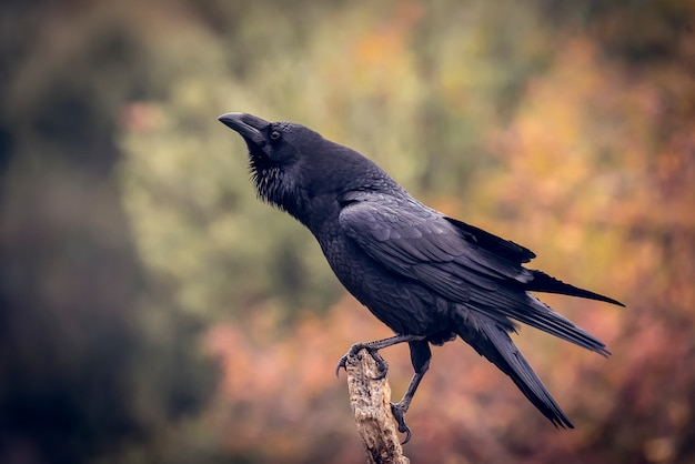 Crow perched on a branch