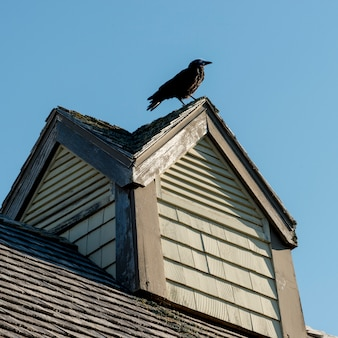 Crow perching on rooftop, avonlea, green gables, prince edward island, canada