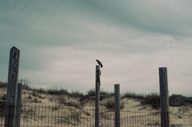 Ворона сидит на деревянной колонне в безлюдной местности