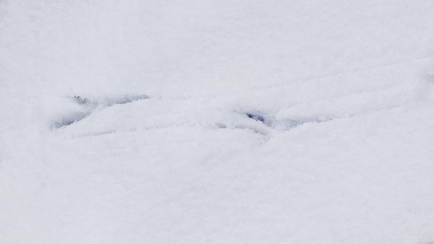 까마귀는 하얀 눈에 추적합니다. 새의 흔적