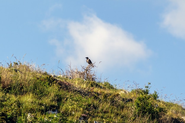A crow on a wooden pole in the mountain