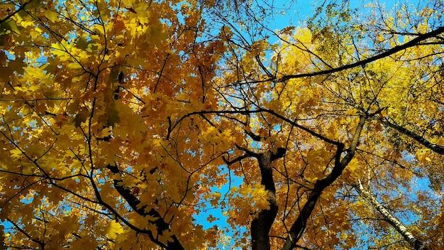 Крона осеннего дерева на фоне неба