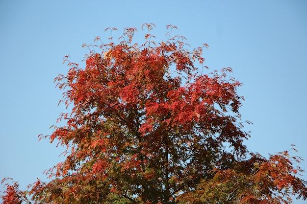 空を背景に赤い葉の山の灰の冠