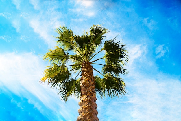 The crown of a palm tree against a blue sky. the concept of holidays in tropical countries, holidays by the sea