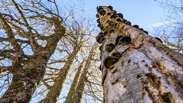 러시아 소치 위쪽으로 나무 ftom의 크라운 보기.