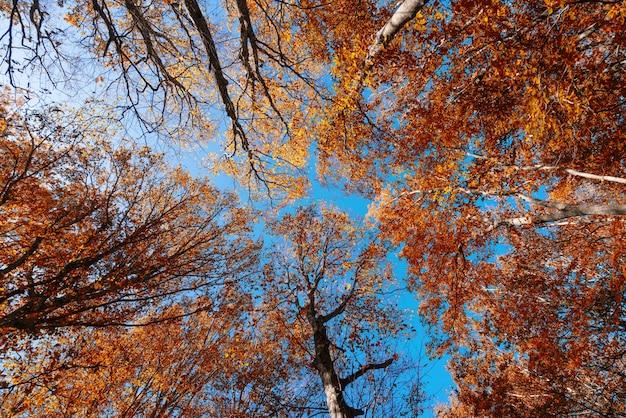 Короны осенних деревьев на фоне голубого неба.