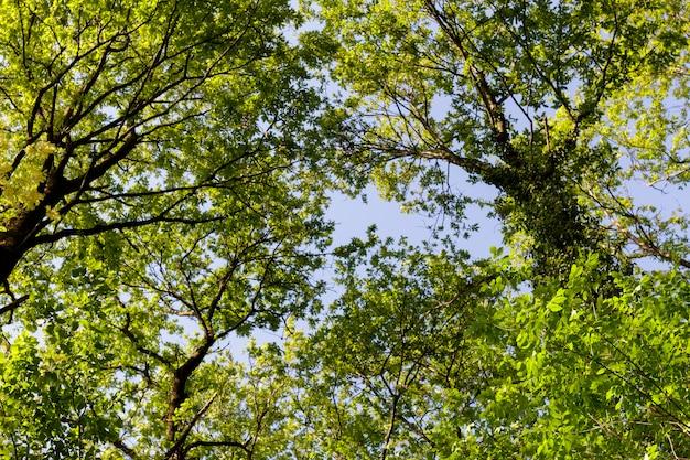 햇볕에 쬐 인 숲에서 나무의 왕관