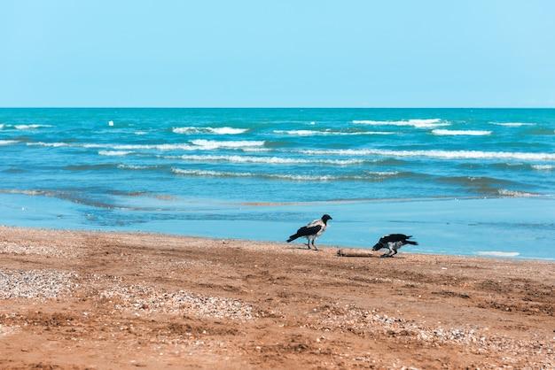 Вороны на берегу едят рыбу