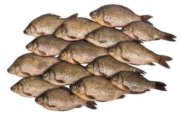 Crucian carp stacked rows