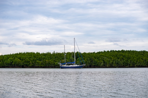 Cruise to the mangrove forest. natural exploration