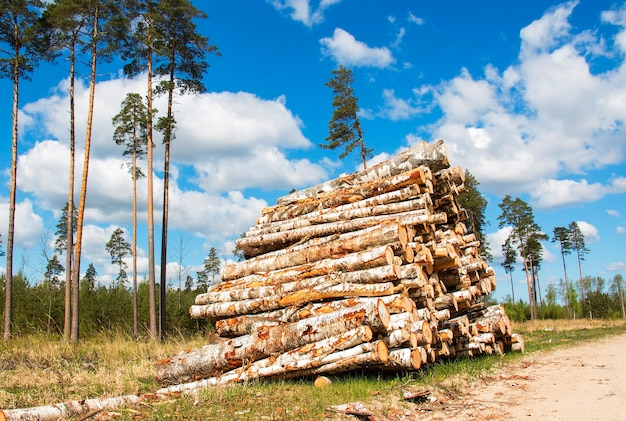Crushed wood logs for sale in the forest, energy of green biomass