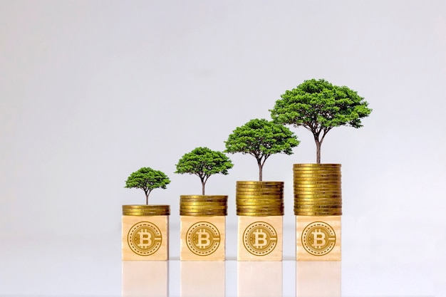 Cryptocurrency business ideas and future technology. tree on coin and wooden block with bitcoin symbol hologram.