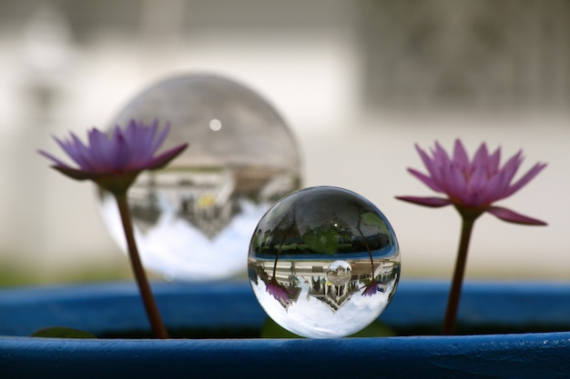 Crystal ball with two purple flowers next to it