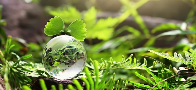Crystal globe glass resting on stone with green leaf and sunshine in nature. eco environment concept