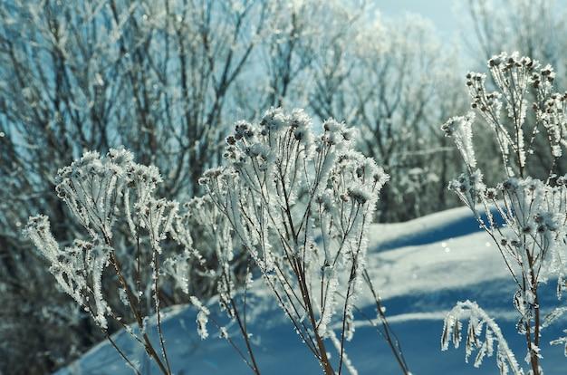 青い空を背景にクリスタルスノーフラワー。霜の自然の結晶の冬の不思議。冬のシーンの風景