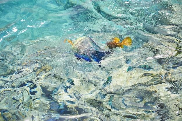 Кристально бирюзовая вода красного моря. фон поверхности воды красного моря. вид сверху на яркую рыбу под кристально чистой морской водой. волны на лазурной глади красного моря