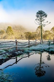 겨울철 철조망의 결정화 된 얼음