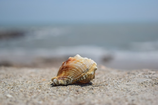 여름에 해변에서 cu 조개