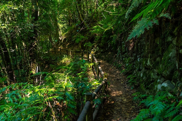 Cubo de la galga natural park on the northeast coast of the island of la palma