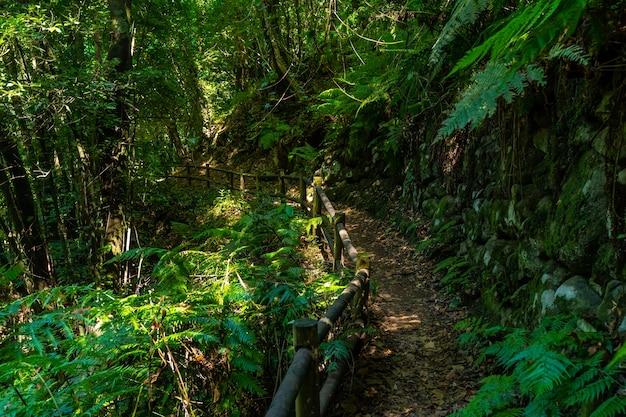 Природный парк кубо-де-ла-гальга на северо-восточном побережье острова ла-пальма
