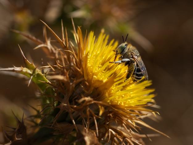 자연 환경에서 뻐꾸기 꿀벌.
