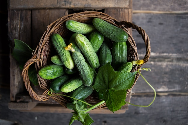 Cucumber in basket. cucumber harvest from the field