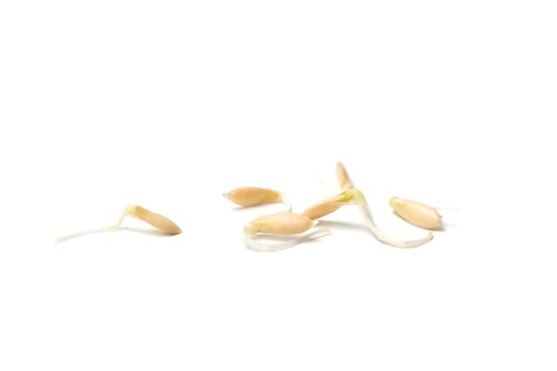 땅에 심을 준비가 된 콩나물과 오이 씨앗