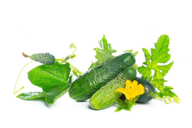 Cucumber with leaf and flower natural vegetables organic food isolated on white