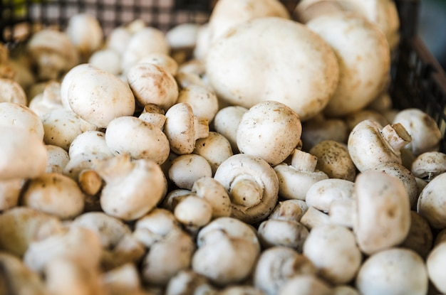 Cultivated button mushroom for sale at grocery store market