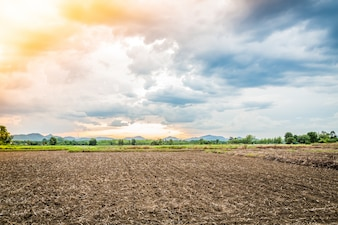 Cultivated field at sunset