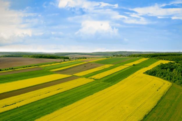 Возделанное поле желтого рапса на фоне голубого неба