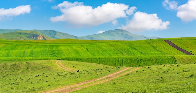 Культивируемые зеленые поля фермы с голубым небом и облаками