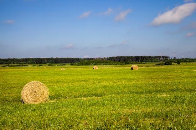 穀物の栽培